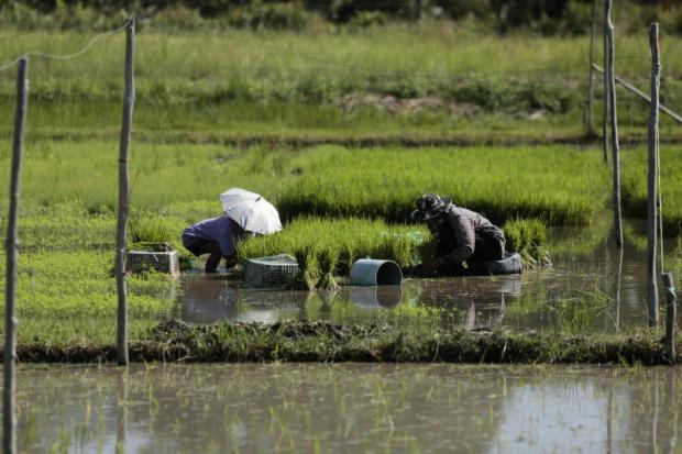 King Rama IX's water legacy lives on