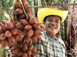 The salak king of Thailand