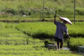 Rice shipment prospects rosy