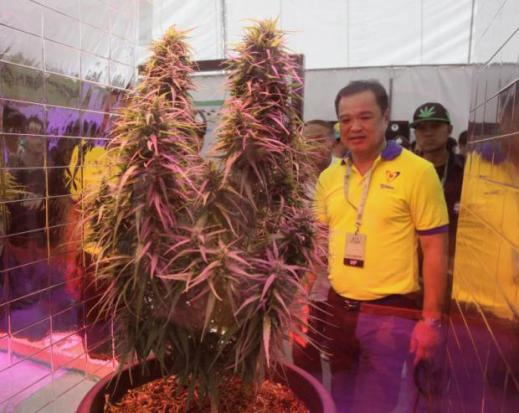 Pot enthusiasts celebrate first weed fair | Bangkok Post: news