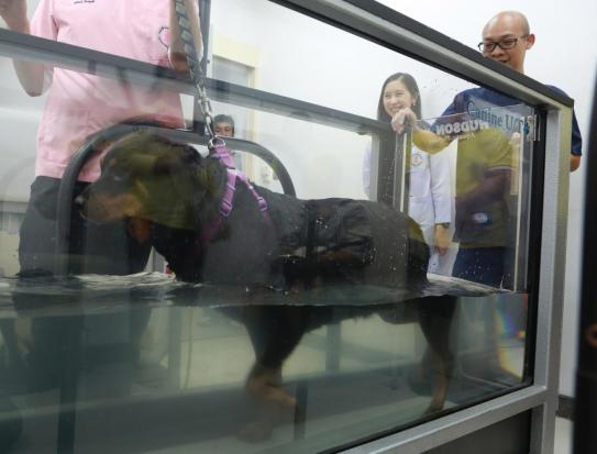 Obesity is not a dog's best friend   Bangkok Post: news