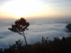Sea of Fog and Beautiful Flower Blossom on Phu Ruea