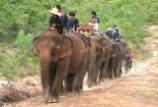 Surin's elephant village