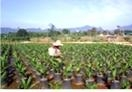 palm plantation nursery