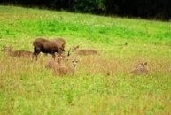 Phu Khiao Wildlife Reserve