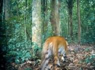 Phu Khiao Thung Kramang Wildlife Sanctuary Park