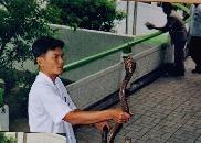 Queen Saowapha Memorial Institute & Snake Farm
